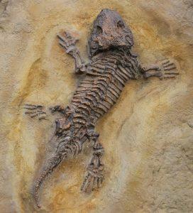 Versteinerte Lebewesen werden Fossilien genannt.